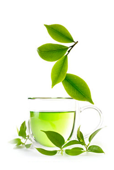 Green Tea Phyto Green Tea